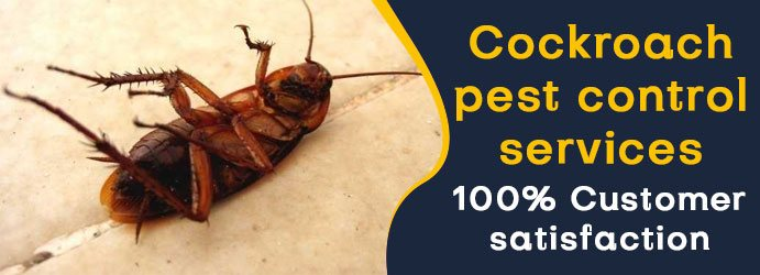 Cockroach Pest Control Carrara