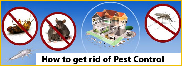 How to Get rid of Pest Control