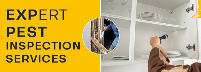 Pest Inspection Service Southern Lamington