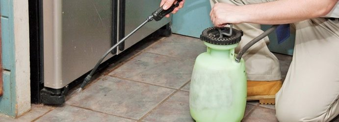 Pest Treatment Service